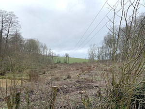 photo of resilience round telegraph poles